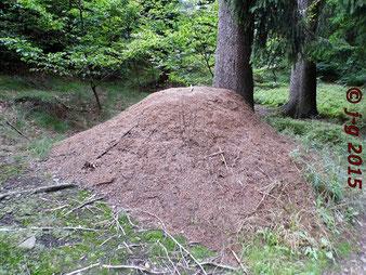 Direkt am Wegesrand stehen die größten Ameisenhaufen.