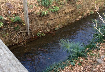 ☆鎌倉橋の上からのぞいた玉川上水の清流。