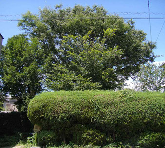 2013年8月の樹木