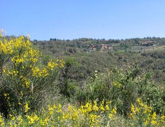 Urlaub in der Toscana, Bio-Ferienhaus