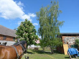 Blick auf den Ökohof Fläming mit nachhaltiger Landwirtschaft, Einsatz von Pferden und alter Scheune