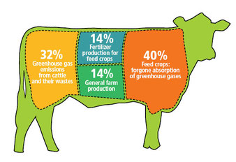 How beef production leads to greenhouse gases