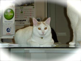 新潟市西区(黒埼)の動物病院です
