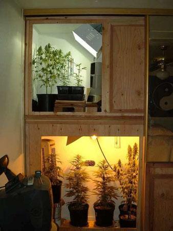 Ein Wandschrank als Grow Raum