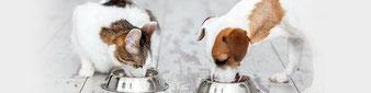 blog pour chien et chat