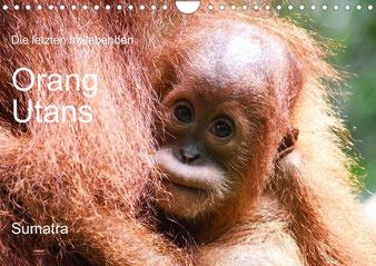 orang-utans-kalender-2021-sumatra