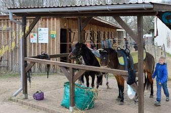 Zwei unserer Ponys auf der Putzplatte.