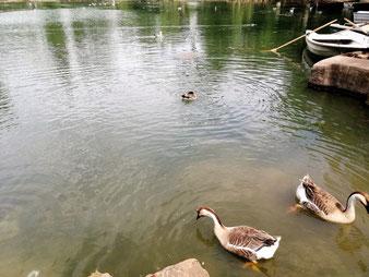 Вилла Боргезе в Риме озеро