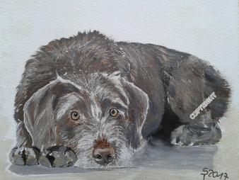 Hundeporträt: Grauer Jaghund liegend. Hund schaut Betrachter an