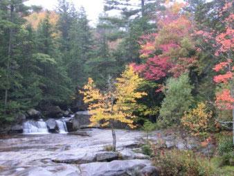 Laubbäume in herbstlichen Farben