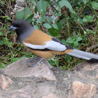 Bharatpur mit Keoladeo Nationalpark - Bird Sanctuary