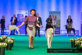 Der Barsoi auf Hundeshows! Barsois für Hundeausstellungen sowie Hundesport! Unsere Windhunde - Barsoi und Deerhound- haben FCI Ahnentafeln!