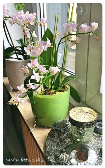 Kontraste durch zarte Blüten, Glas und Versteinerung