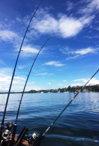 Hecht, Fischen, Seeland, Esox, Murtensee, Schleppfischen, Köder, Wobbler, Gummifischen, Fischerblog, News