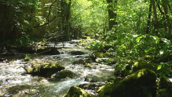 Fluss im Mavrovo Nationalpark [Foto: Darko Nikolovski, CC BY-SA 3.0]
