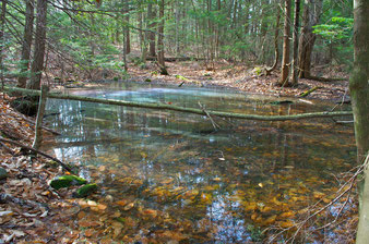 Vernal pools form from the spring snowmelt and 'April Showers', but will dry up by late summer in most years.