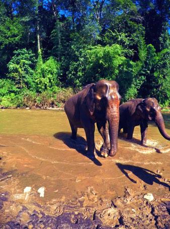 Thailand Dschungel Trekkingtour Elefanten