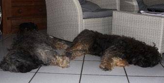 # Hummel und Feetje beim Relaxen