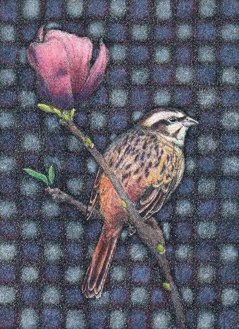 「ホオジロと木蓮」150x110mm 細密ペン画 216,000円(税・額込み)