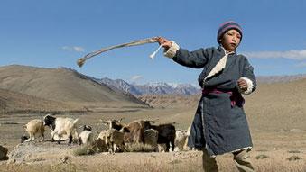 Live-Reportage «Nomaden im Himalaya» von Thomas Zwahlen