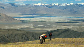 Live-Reportage «Mit Pferden durch Ladakh» von Thomas Zwahlen