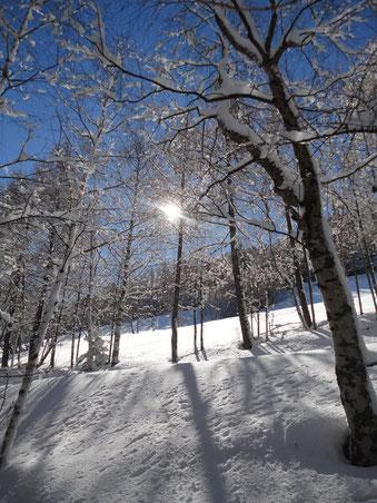 Schee Schnee