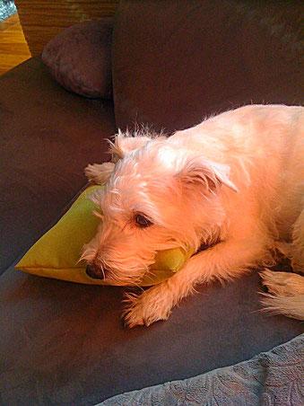 Hundekissen, Stützkissen nach Maß für Tiere, Gudwork