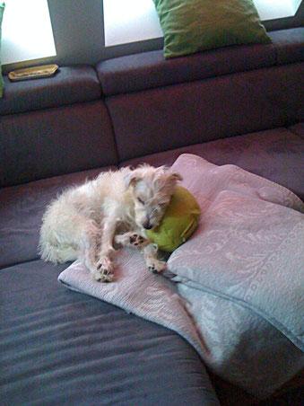 Hundekissen, Stützkissen, Lagerungskissen, Ruhe Kissen für Tiere nach Maß