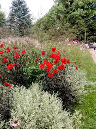 Rotblühende Büsch am Weg - Eingang Botanischer Volkspark Blankenfelde in Pankow-Berlin. Foto: Helga Karl