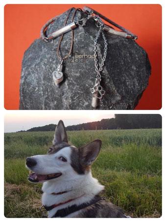 Erinnerung Hund aus Hundefell