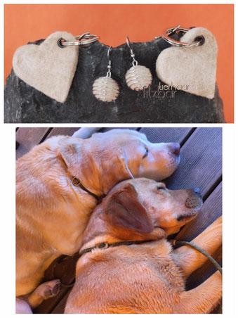 Hund Erinnerung; Hundefell