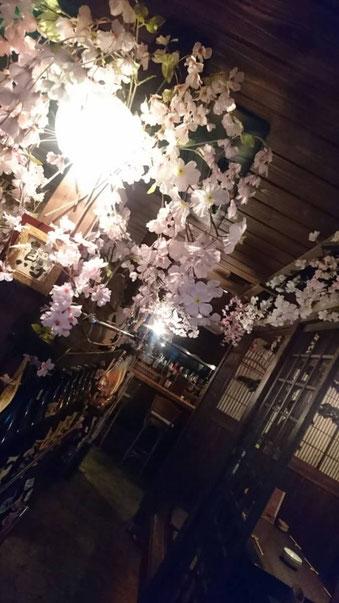 バンブーの桜