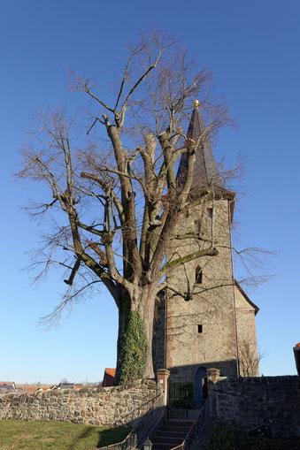 Linde bei der Kirche in Udenhain