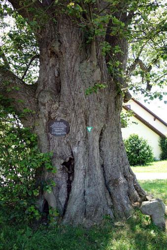 Der Kalte Baum Vohenstrauß