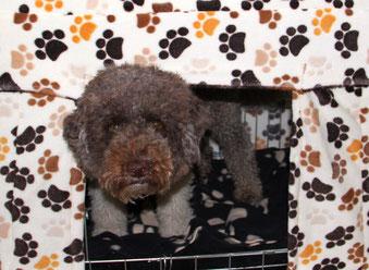 Fleecestoff mit Hundepfötchen
