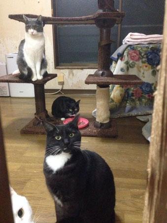 あけおめです!ごはんを食べているのは滅多に姿を見せない幻の猫です!正月早々演技がいいです!!
