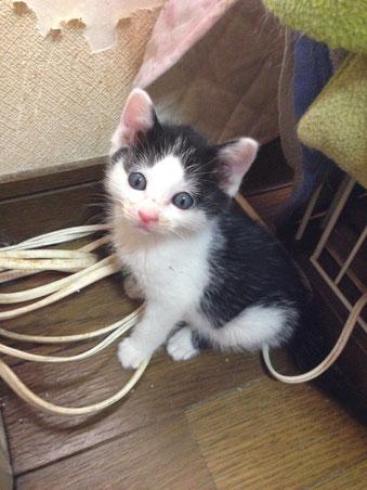 子猫1のくいしんぼう。天使のような子