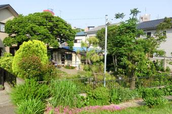 晴れた日の塾。初夏らしく木々が茂っています。