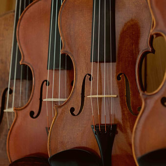 Eine Auswahl unserer Geigen, die wir zum Kauf anbieten.
