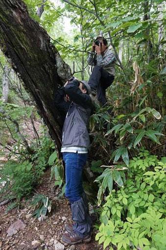 怪しい植物を観察するNさん(奥)とOさん (Ken撮影)