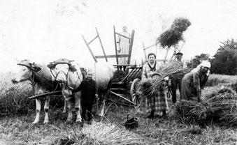 Getreideernte in Derdingen – ca. 1930