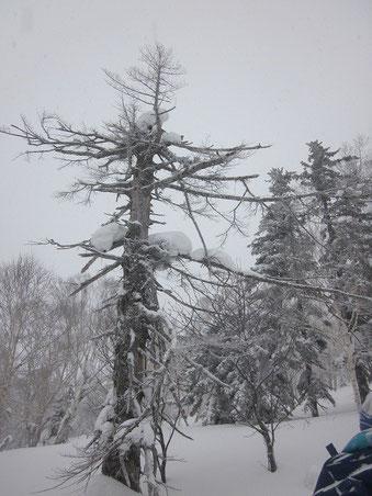 2014.3.22 雪景色<その2>     奥手稲山にて