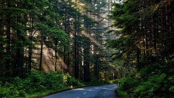 Straße durch den Wald.