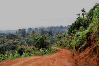 Shimbwe