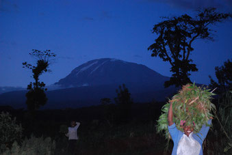Abendstimmung am Kilimanjaro