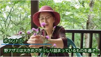 花かご作りの花選び