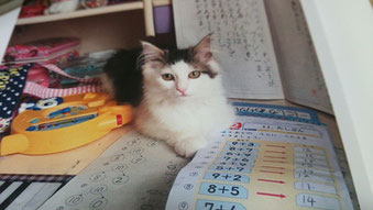 お姉ちゃんの机にまりいちゃん♪