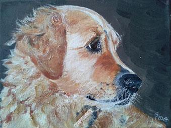 Hundeporträt: Golden Retriever. Kopf seitlich dargestellt
