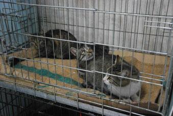 Die Katzen bleiben nach der Kastration noch eine Nacht beim Tierarzt