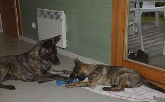 Bobbie en Dyson in het vakantiehuisje .. vlak voor het afscheid.
